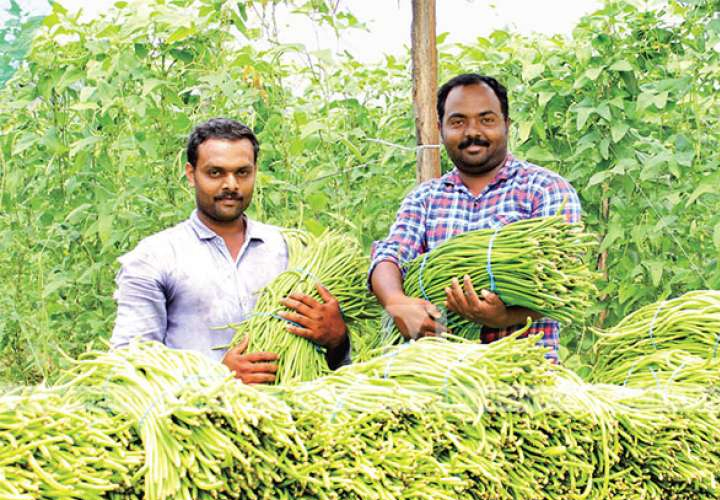 Dirham yielding aching beans; The story of two agricultural entrepreneurs in Wayanad