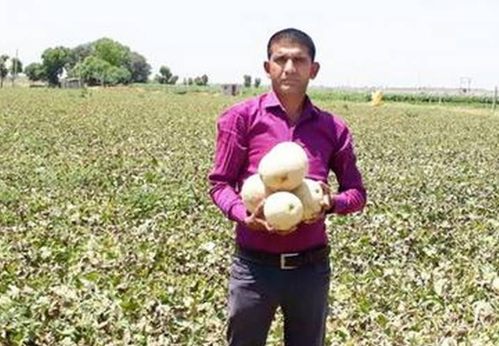 Gujarat farmer strikes it rich with muskmelon; drops the not-so-hot potato