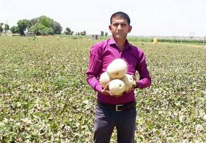 Gujarat farmer strikes it rich with muskmelon; drops the not-so-hot potato