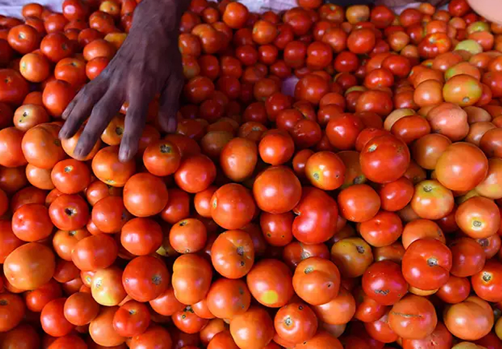 Tomato prices rise to ₹70/kg in Delhi