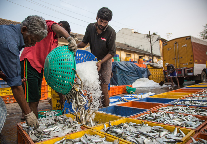 corona affects fishing