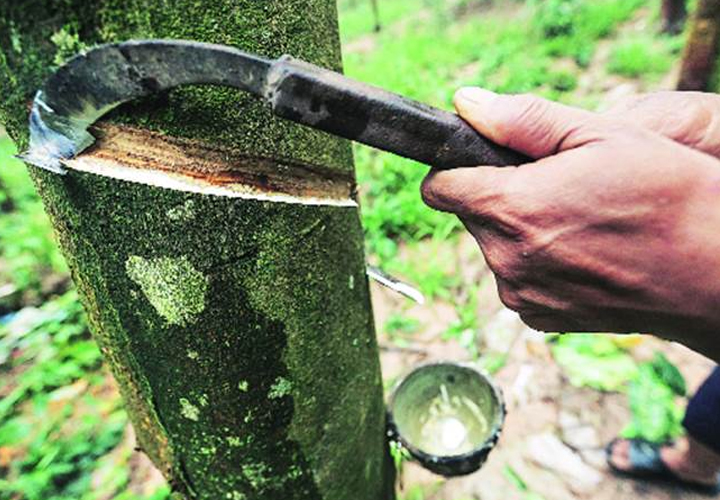 lockdown for rubber growers loss 300 crore