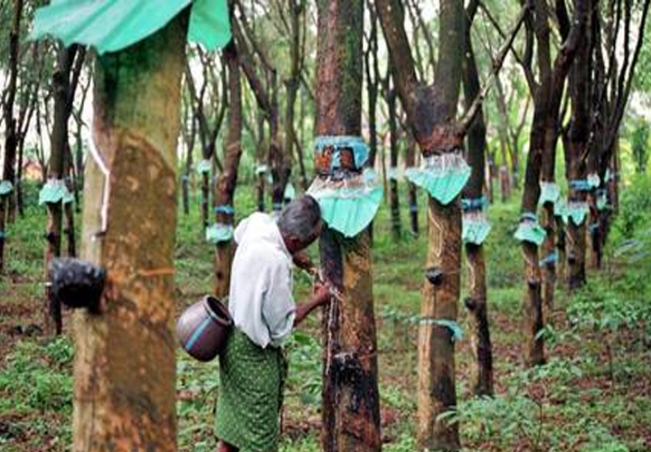Natural rubber prices at 6-year high but growers are not selling